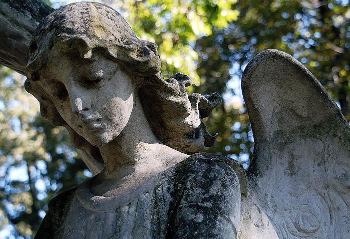 24 Lipoa anioł smutek